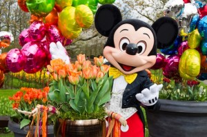 Mickey Mouse & Disneyland Paris Tulip